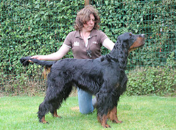 Gordon Setter Irving John Beautiful Darkness