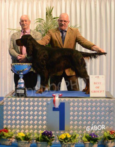 Gordon Setter Vereniging Nederland