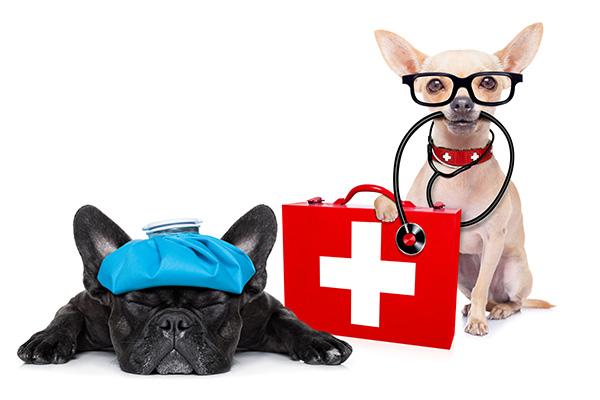 Workshop EHBO voor honden